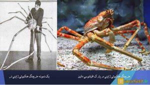 تصویر: انواع خرچنگ ها ، دانلود پروژه بررسی زندگی خرچنگ