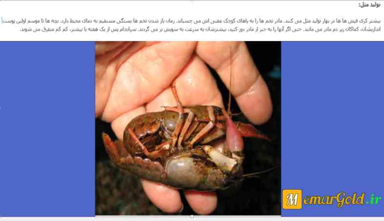 تصویر: تولید مثل خرچنگ ها ، دانلود پروژه بررسی زندگی خرچنگ