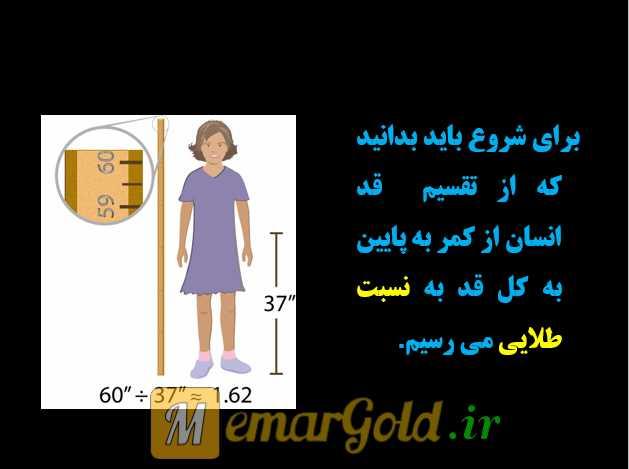تناسب طلایی بدن انسان